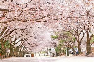 [Korea Spring Festival] Cherry Blossom Night Tour – Seoul ...