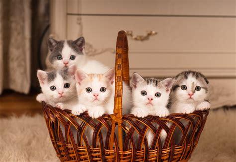 mon chat va souvent au toilette ma chatte va avoir des chatons dossier sp 233 cial wikichat