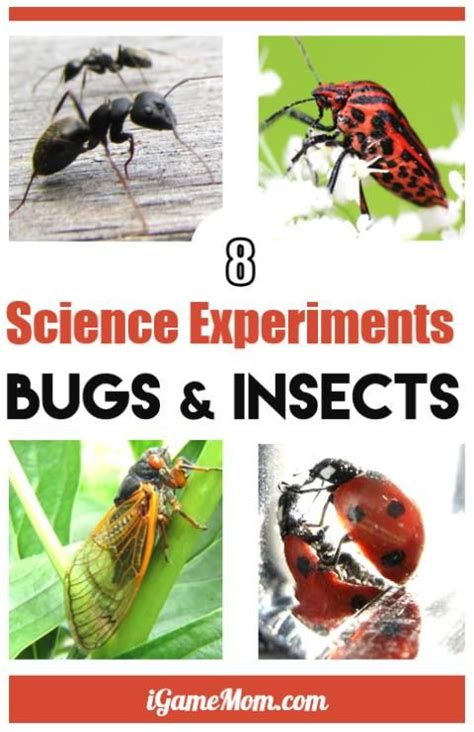 8 simple science experiments with bugs igamemom stem 407   33a45b7b440f97d274cbc20b21de670d