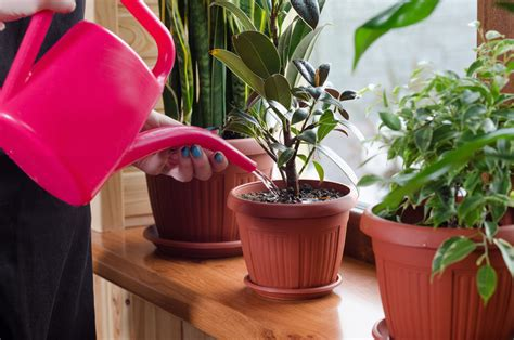 How Much To Water Houseplants