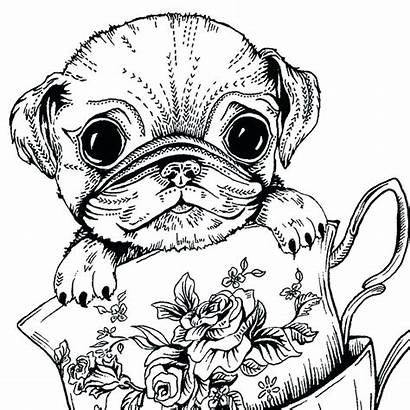 Coloring Pages Dog Adults Pug Printable Colouring
