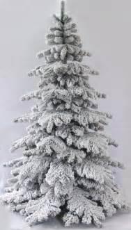the 6ft snow white fir