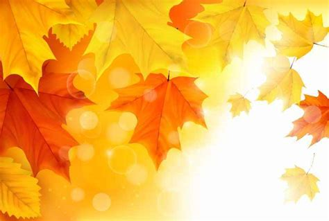 Fall Backgrounds Yellow by Free Vectors Free Vector Free Vector Graphics