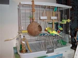 Vogelkäfig Selber Bauen : ist dieser k fig gut frage zum spielzeug ~ Lizthompson.info Haus und Dekorationen