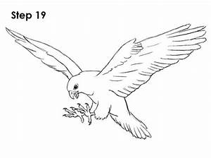 How To Draw A Falcon Flying | www.imgkid.com - The Image ...