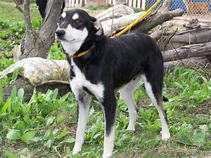 Medium dogs Ava... Dogs For Adoption