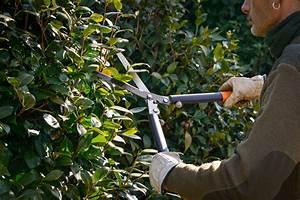 Bäume Schneiden Wann Erlaubt : str ucher schneiden wann ist das erlaubt ~ A.2002-acura-tl-radio.info Haus und Dekorationen