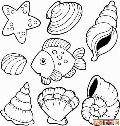 Coloring Shells Sea Shell Printable Coquillage Seashell