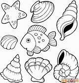 Coloring Shells Pages Beach Sea Printable Popular sketch template