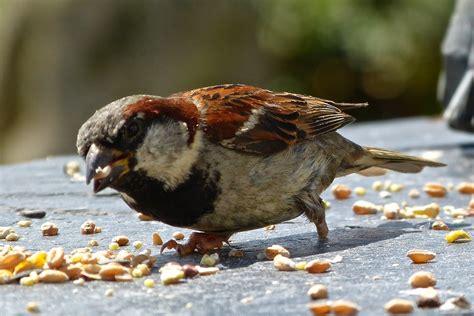 birds eat studentprojectworks