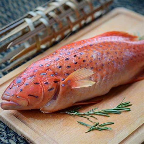 grouper fresh singapore fish seafood ninja food market delivery eat snapper menu meaning