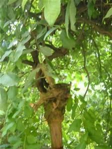 Kleiner Baum Mit Breiter Krone : baum mit h ngender krone welcher ist das salix caprea ~ Michelbontemps.com Haus und Dekorationen