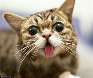 Grumpy Cat and Lil Bub rub noses as they meet for the ...