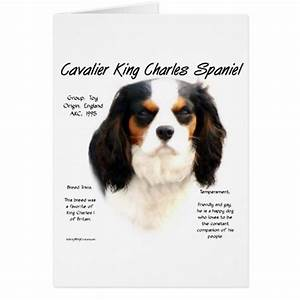 Cavalier King Charles Spaniel (tricolor) History | Zazzle