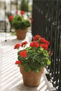 Composteur De Balcon : comment faire du compost sur son balcon ooreka ~ Melissatoandfro.com Idées de Décoration