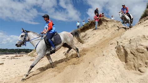 horse elite horses