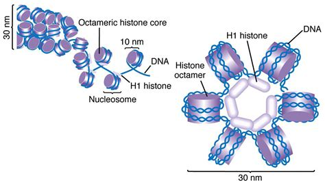Post Translational Modification Adalah by Chromosome Structure Hercwules