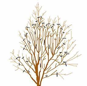 Taille Du Lilas Des Indes : magazine petit jardin n 81 juin 2013 jardinage ~ Nature-et-papiers.com Idées de Décoration