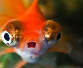 Funny Animal Shocked Face