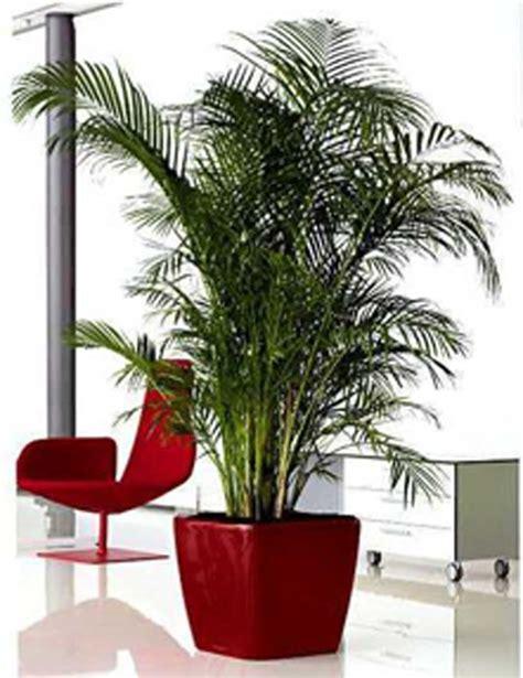 pianta da interno periodo invernale le piante da interno decorazioni interni
