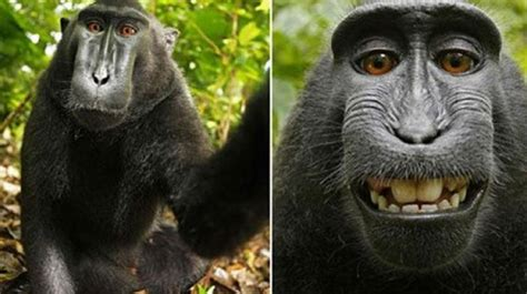 animal selfies unveil biodiversity  amazon forest