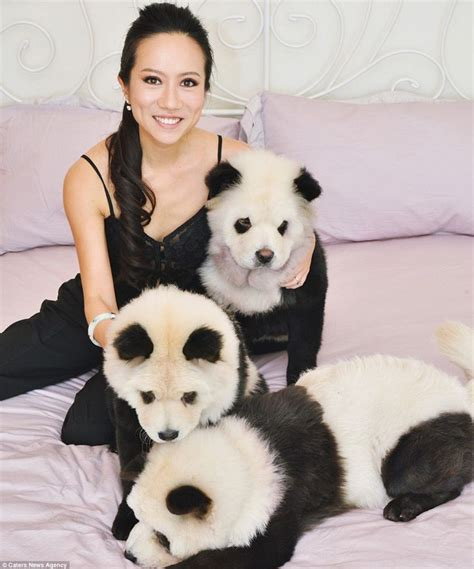 owner  dyed panda dogs hits   critics