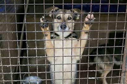 Shelter Dogs Dog Owner Tufts Vet Euthanasia