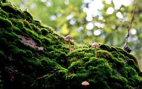 Mushroom Wallpaper Landscape
