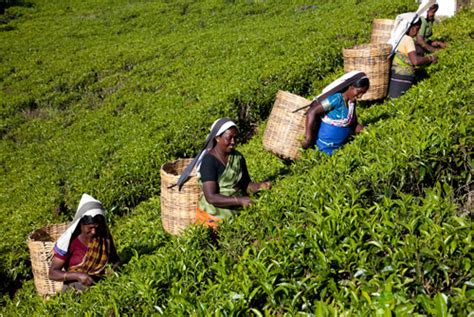 women plantation workers nagenahiru foundation sri lanka