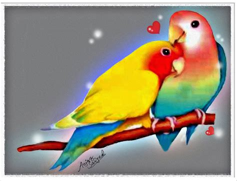 3d Birds Wallpapers by 3d Birds 5 Desktop Wallpaper Hdlovewall Lovebird