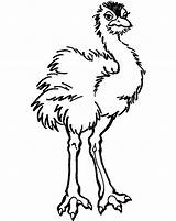 Ostrich Coloring Printable Animal Bestcoloringpagesforkids Clip Ostriches Printables Results sketch template
