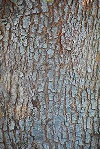 Tree Bark Texture 01 by WingsOfAHero on DeviantArt