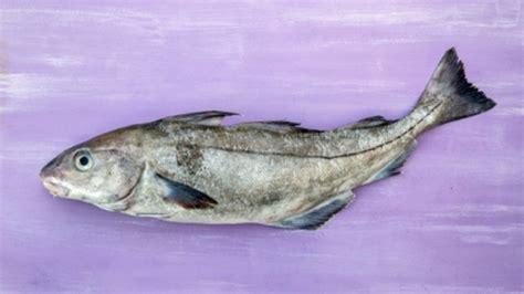 recette pour cuisiner l 39 aiglefin haddock conseils de