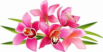 Clipart Orchid Flower Clip Transparent Flowers Frame