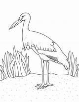 Stork Coloring Pages Printable Museprintables Getdrawings Getcolorings Popular sketch template