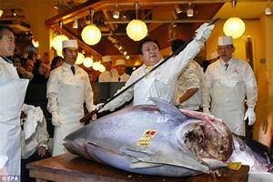 Bluefin tuna sells for a record £1MILLION in Japan (or a ...