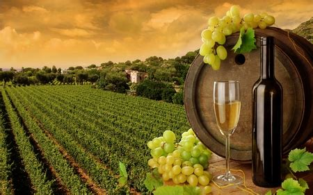 wine fields nature background wallpapers  desktop
