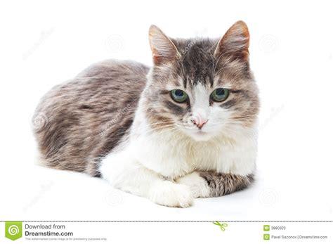 cat calm eyes kitty dreamstime