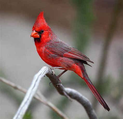 hidden unseen top 10 most beautiful national birds