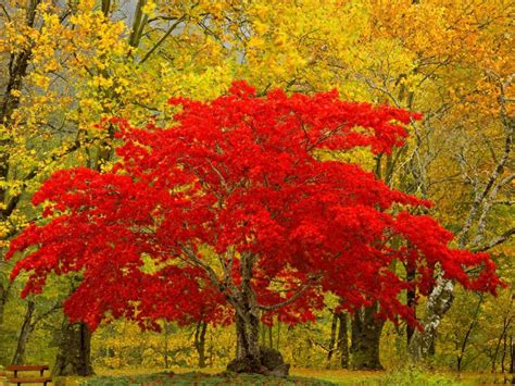 Beautiful Autumn Trees Wallpapers by Only Nature Beautiful Tree Wallpapers