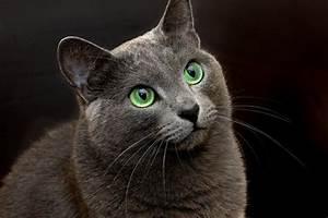 Balkonschutz Für Katzen : tiernamen nach farbe schwarz ~ Eleganceandgraceweddings.com Haus und Dekorationen