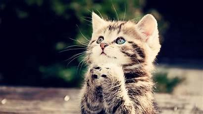 Cute Kitten Wallpapers Wallpapertag Most Screen