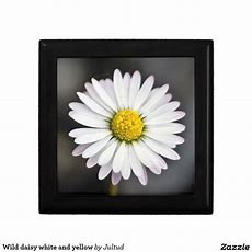 Wild Daisy White And Yellow Gift Box  Home And Kitchen
