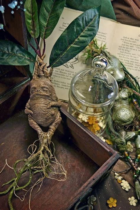screaming plants harry potter merlin s magickal mistress mandrake
