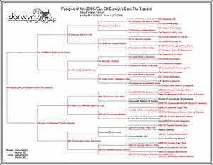 nice horse pedigree template gallery resume ideas With pedigree certificate template free