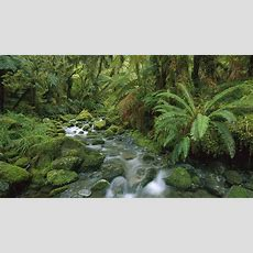 Extra Wallpapers  Small River In Jungle