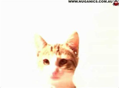 Cat Licking Screensaver Download