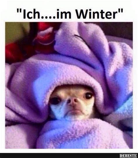 lustige winter bilder die besten 25 lustig chihuahua bilder ideen auf lustige chihuahua zitate lustige