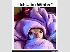 Die besten 25+ Lustig chihuahua bilder Ideen auf Pinterest
