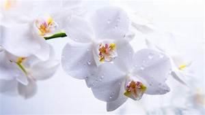 Orchidee Klebrige Tropfen : hd hintergrundbilder orchidee wei blumen tropfen desktop ~ Lizthompson.info Haus und Dekorationen